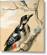 A Great Spotted Woodpecked And Another Small Bird Metal Print