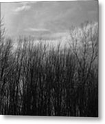 A Grey Point Of View Metal Print