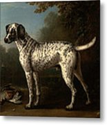 A Grey Spotted Hound Metal Print