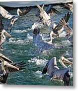 A Group Of Pelicans Metal Print