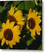 A Group Of Sunflowers Metal Print