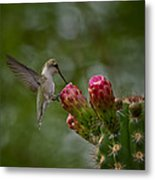 A Happy Little Hummer  Metal Print