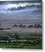 A Heard Of Elk Graze In A Misty Meadow Metal Print