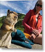 A Hiker Makes Friends With The Local Metal Print