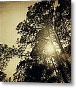 A Hint Of Sunshine Metal Print