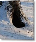 A Hollow In A Tree In Winter Metal Print
