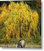 A Horse And A Willow Tree Metal Print