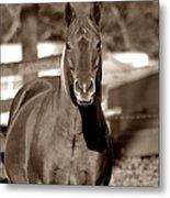 A Horse Is A Horse II Metal Print