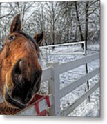 A Horse Is A Horse Metal Print