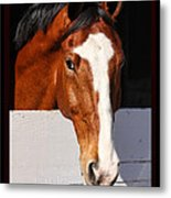 A Horse Is A Horse Of Course By Diana Sainz Metal Print