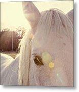 A Horse's Eyes Metal Print