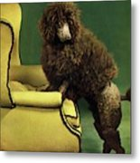 A House And Garden Cover Of A Poodle Metal Print