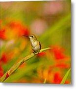 A Humming Bird Perched Metal Print