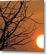 A Hummingbird Setting In A Tree At Sunset Metal Print