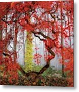 A Japanese Maple Tree Metal Print