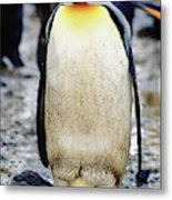 A King Penguin Holds Its Egg Metal Print