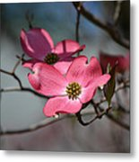 A Kiss Of Pink Metal Print