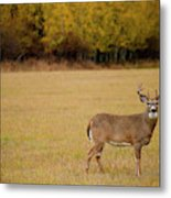 A Large Whitetail Buck Stairs Metal Print