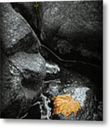 A Leaf On The Rocks Metal Print
