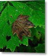 A Leaf Upon A Leaf Metal Print