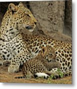 A Leopard Cub With Her Mother Metal Print