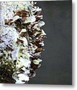 A Lichen Abstract 2013 Metal Print