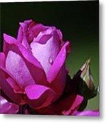 A Light Blue Rose  Metal Print
