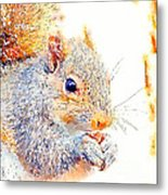 A Little Bit Squirrely Metal Print