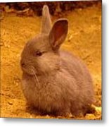 A Little Bunny Metal Print