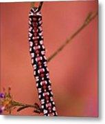 A Little Caterpillar Metal Print