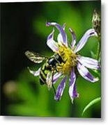 A Little Nectar Seeking Fruit Fly Metal Print