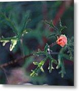 A Little Peach Flower Bud Metal Print