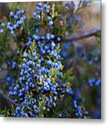 A Local Tree In Winter Finery Metal Print