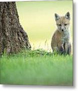 A Lone Kit Metal Print by Everet Regal