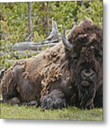 A Lot Of Bull Metal Print by Charles Warren