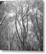 A Low Angle View Of A Ironwood Metal Print