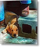 A Man And His Dog Oil Metal Print