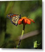 A Monarch Butterfly 1 Metal Print