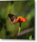 A Monarch Butterfly 3 Metal Print