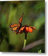 A Monarch Butterfly 4 Metal Print