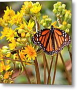 A Monarch Butterfly Metal Print