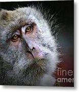 A Monkey's Look Metal Print