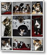 A Montage Of Kittens Metal Print