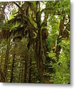 A Moss Covered Tree  In The Ho National Rain Forest Metal Print