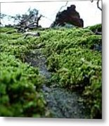 A Mossy Perspective Metal Print