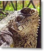A Mother Could Love Him Metal Print