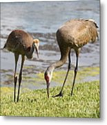 A Mother's Lesson Metal Print
