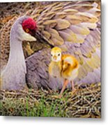 A Mother's Lovely Touch Metal Print