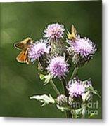 A Moth's Feast Metal Print