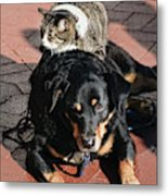 A Mouse On A Cat On A Dog In Santa Metal Print